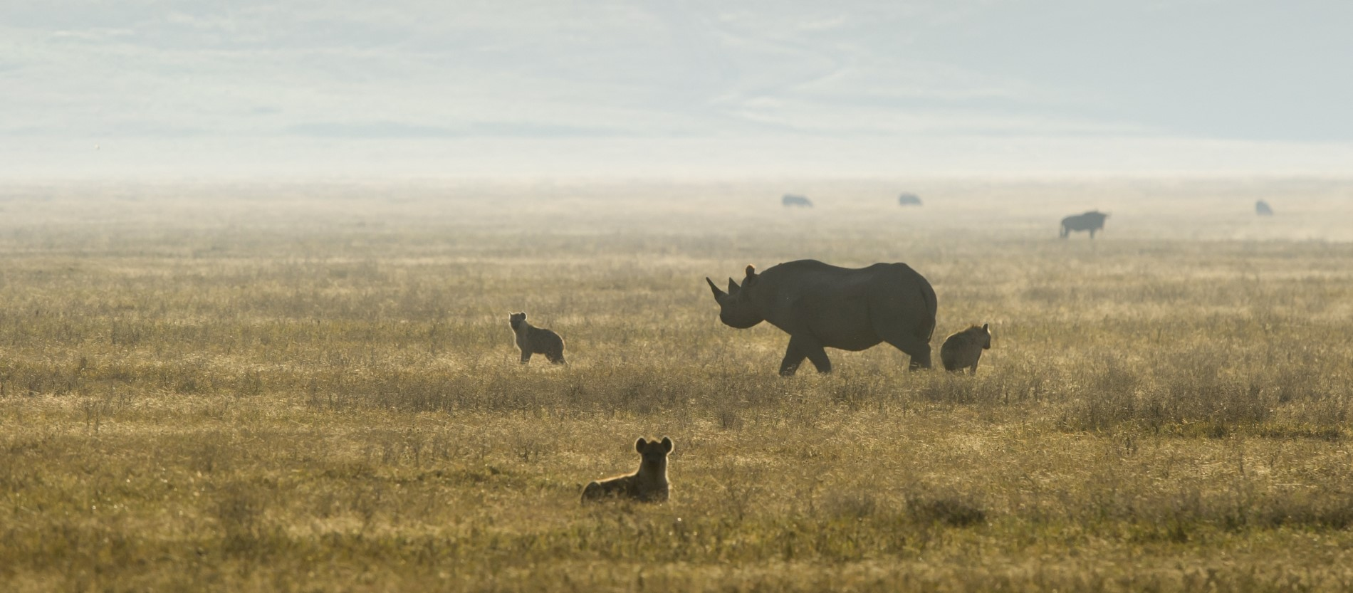 ngorongoro-crater-wildlife