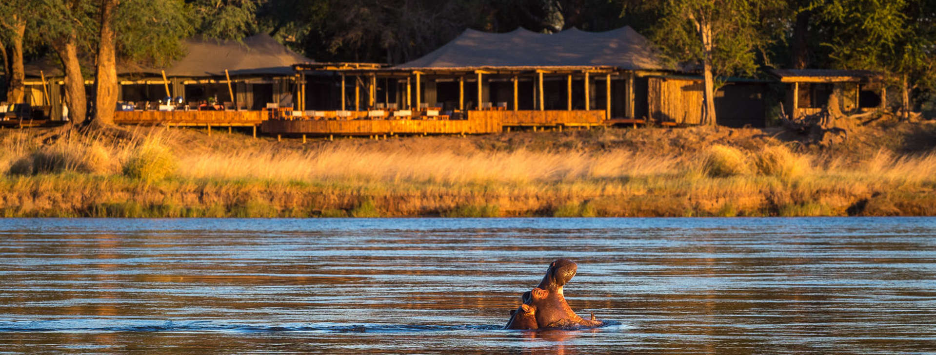 ruckomechi-camp-hippo-in-zambezi