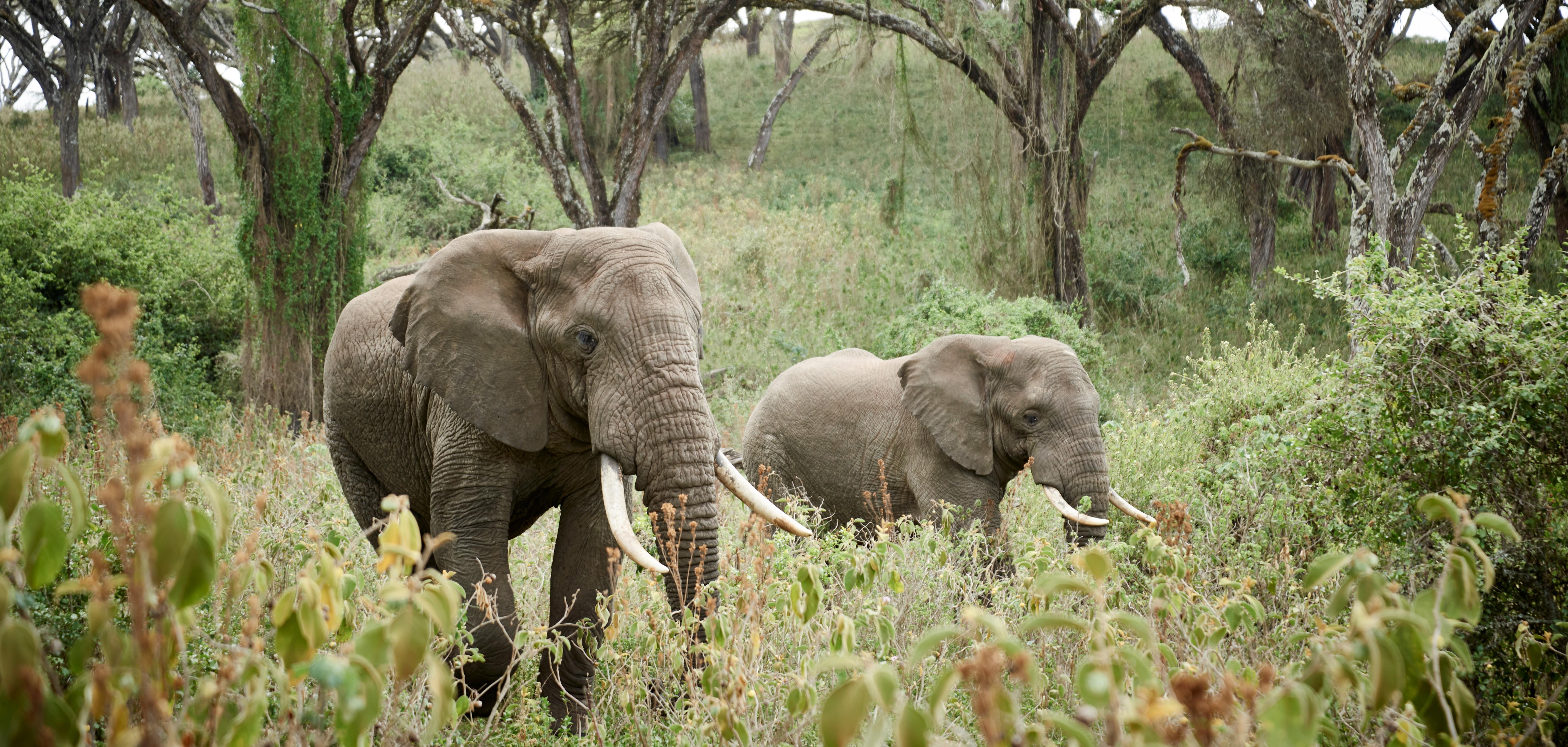 elephants-ngorongoro-crater-tanzania