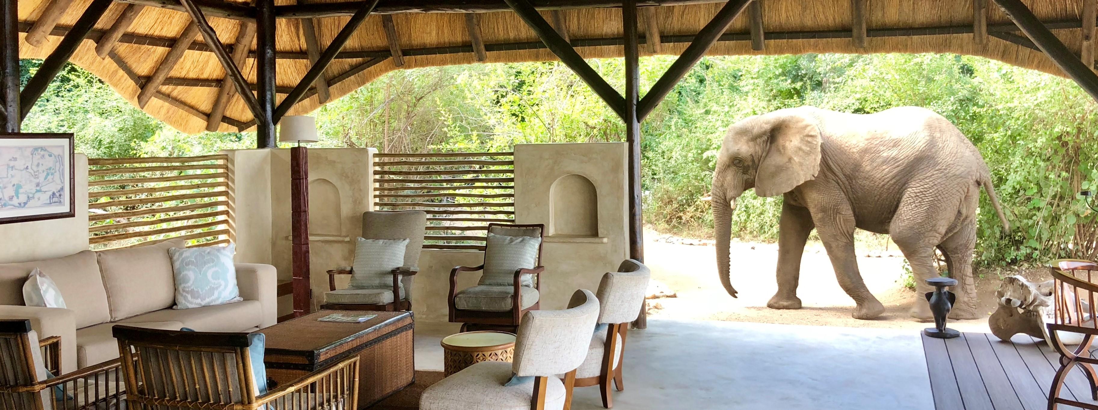 tailor-made-safari-lower-zambezi