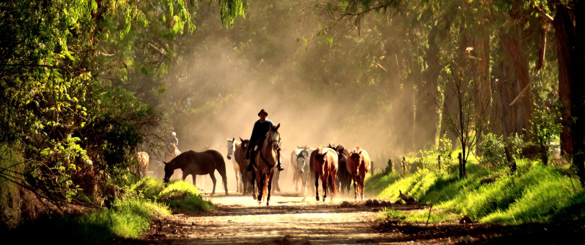 horses-central-highlands-ecuador