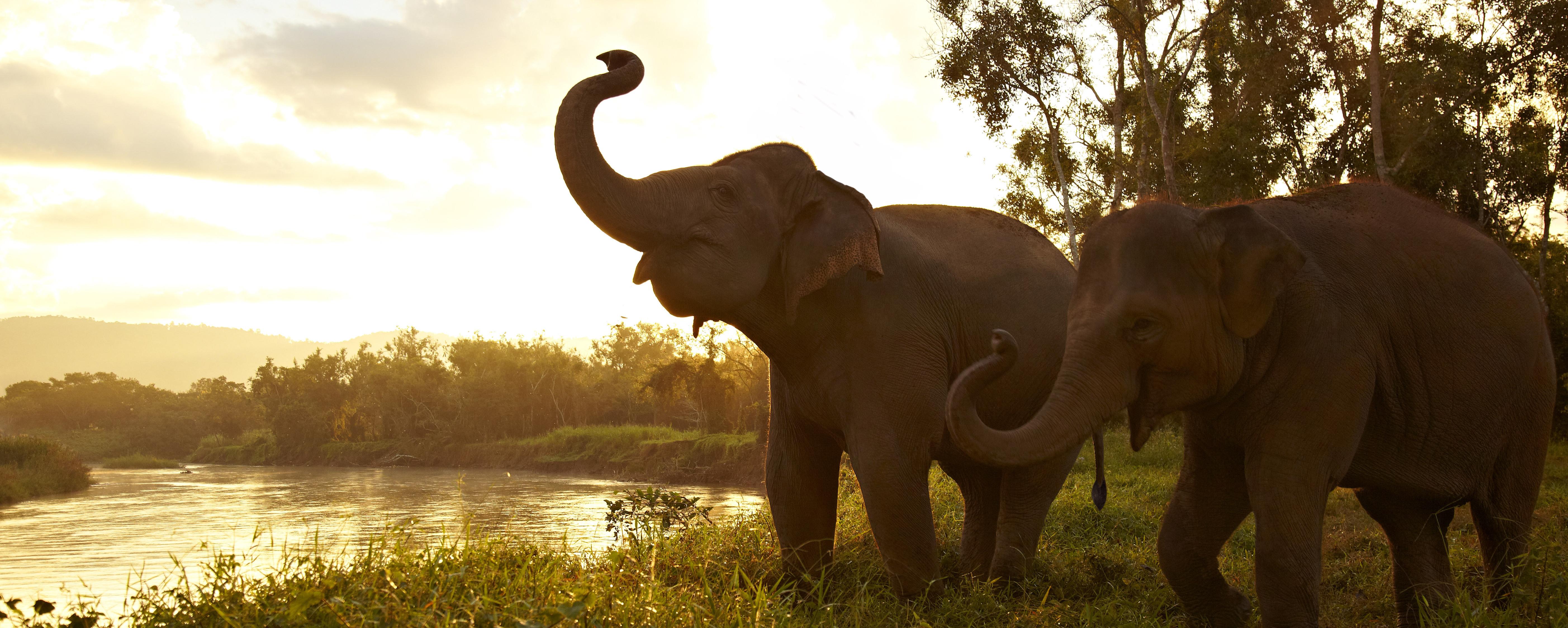 Anantara_Golden_Triangle_Elephant