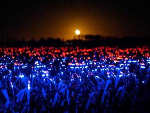 Dynamic Lights Improve Crop Yield