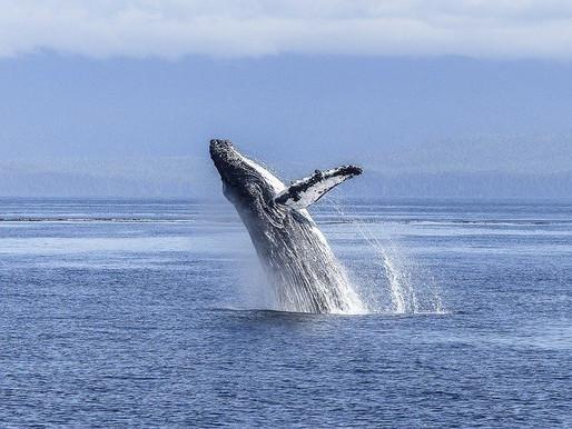 2020: Wonderful Year for Marine Life