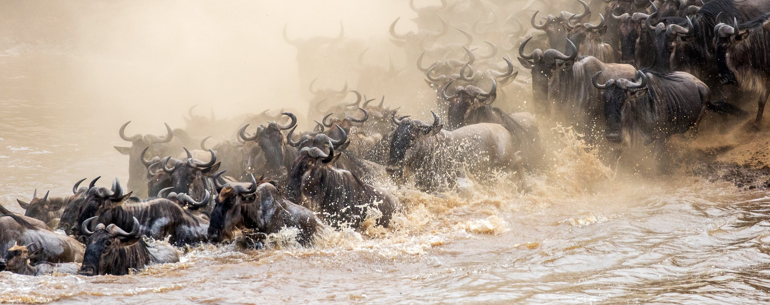 wildebeest-great-migration-kenya