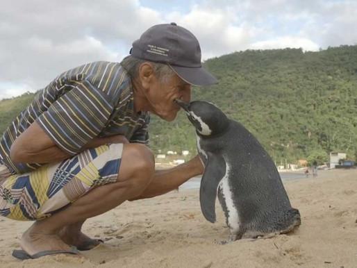 A Penguin's Story