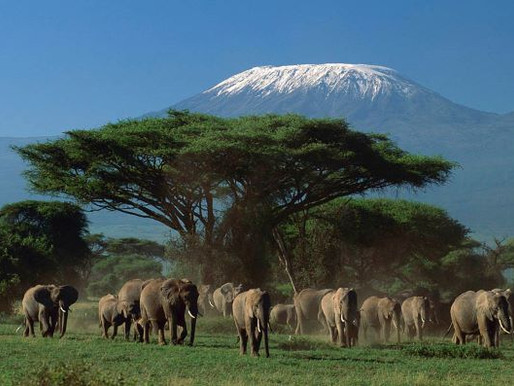 2020: Fabulous Year for Wildlife