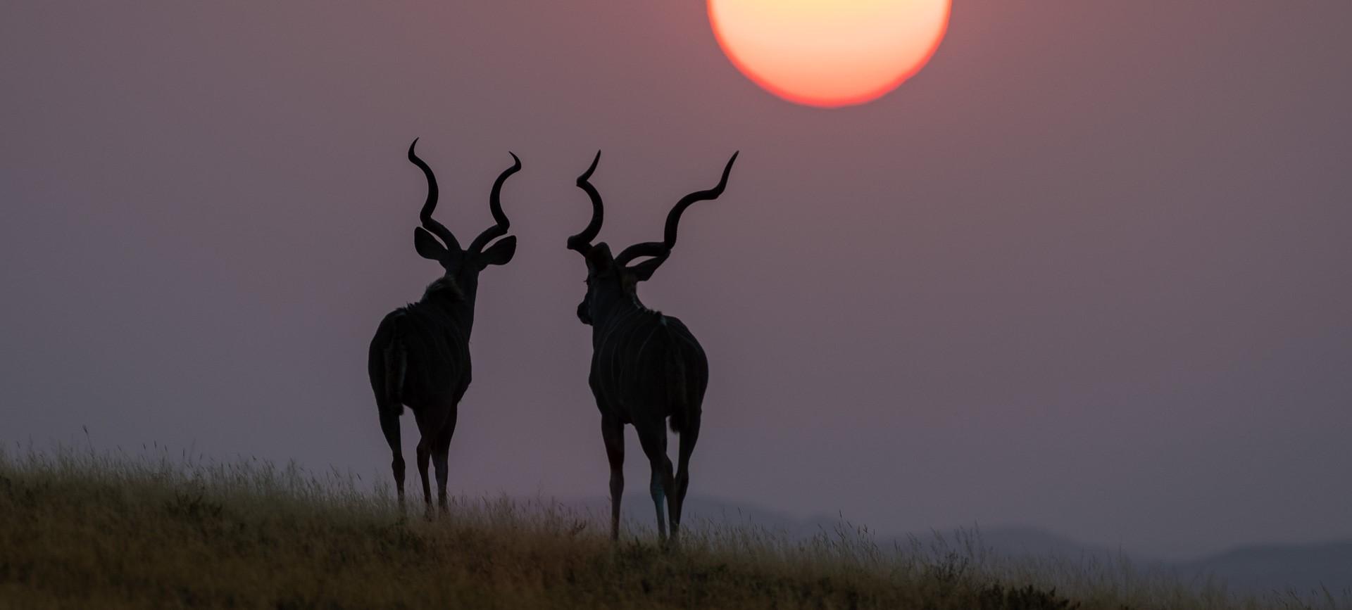 damaraland_tailor_made_safari