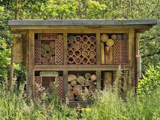 Dutch Bee Strategy