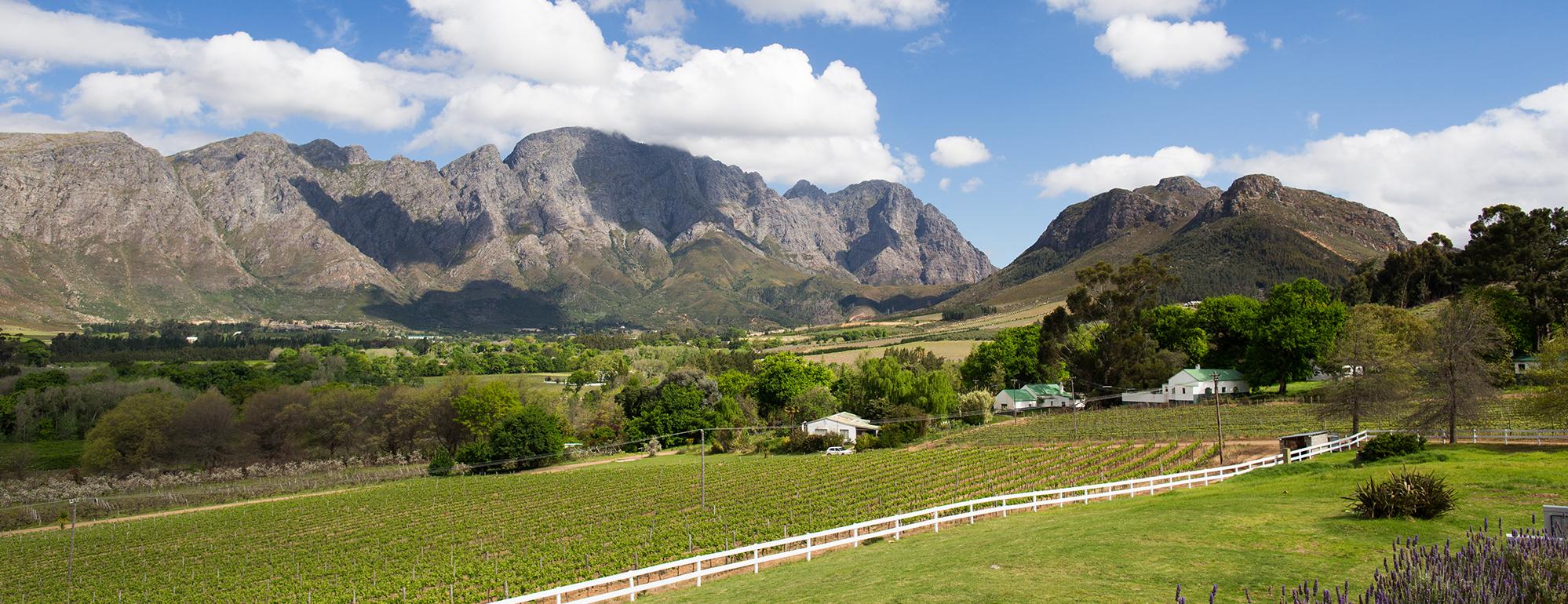 mont-rochelle-vineyard-view