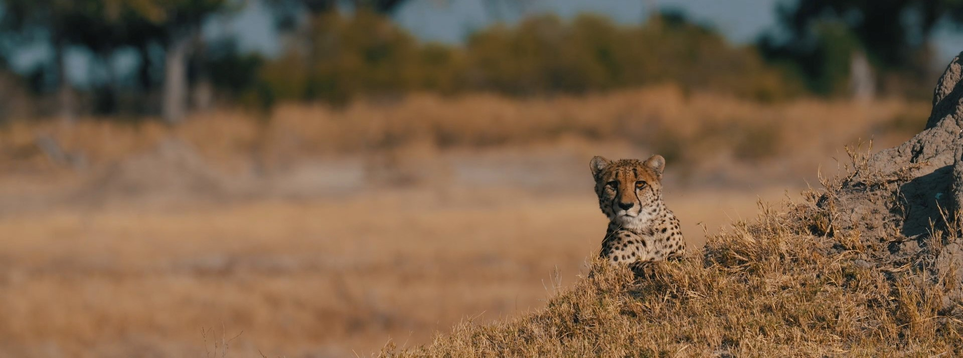 leopard-sighting-okavango-delta