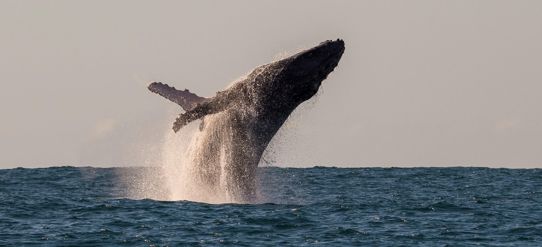Whales_Manafiafy_Madagascar