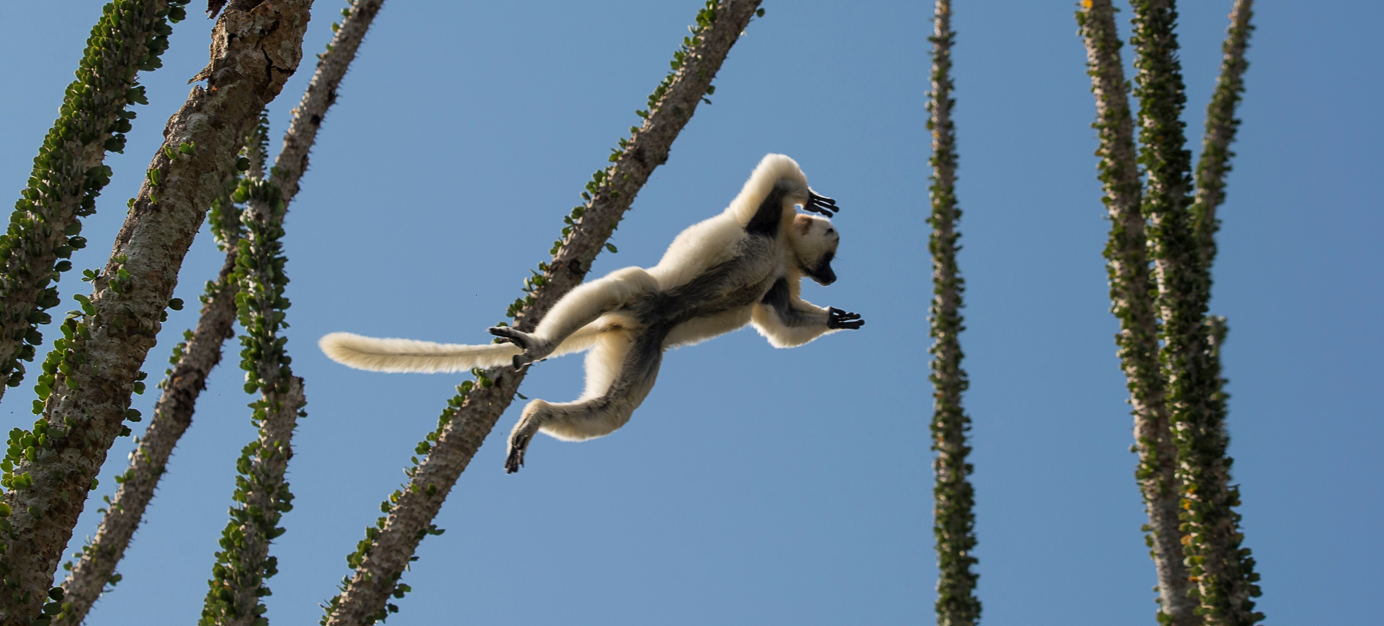 tailor-made-madagascar-lemur-safari