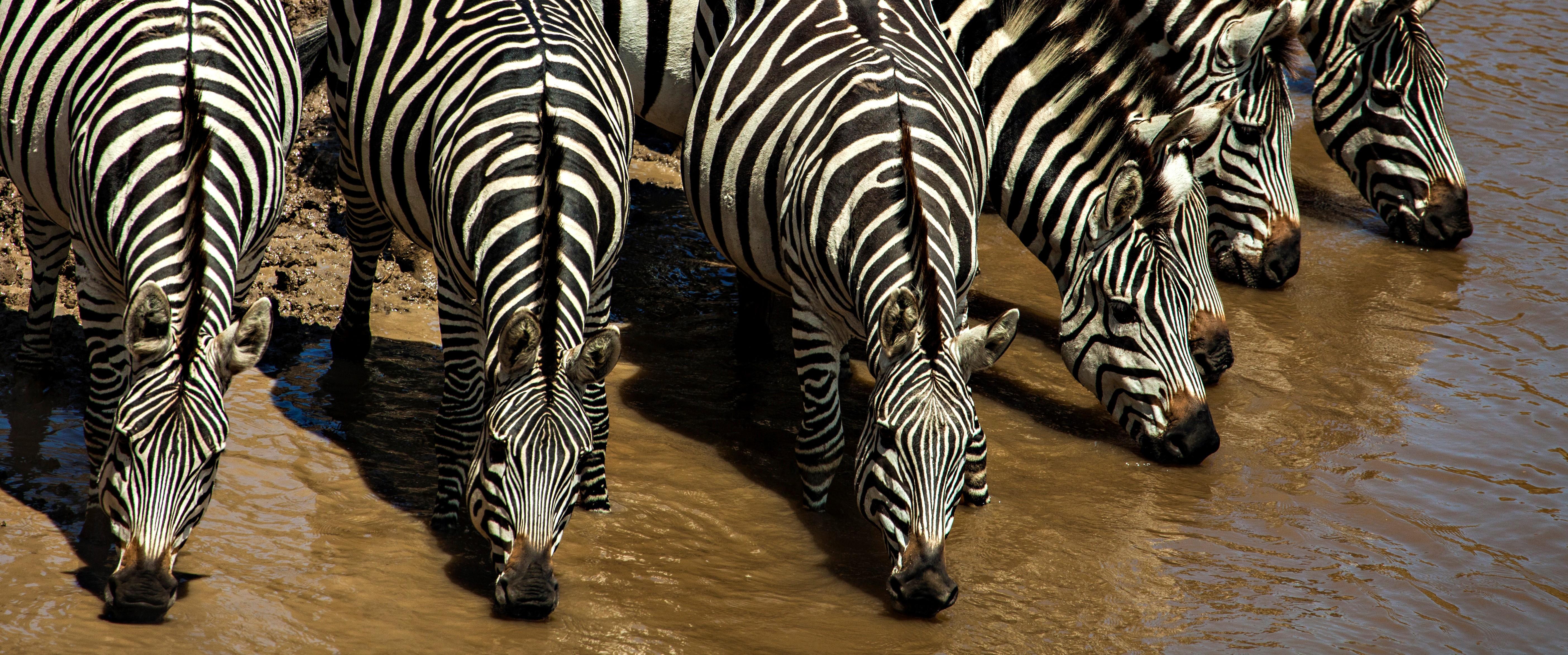 zebra-water-hole-serengeti