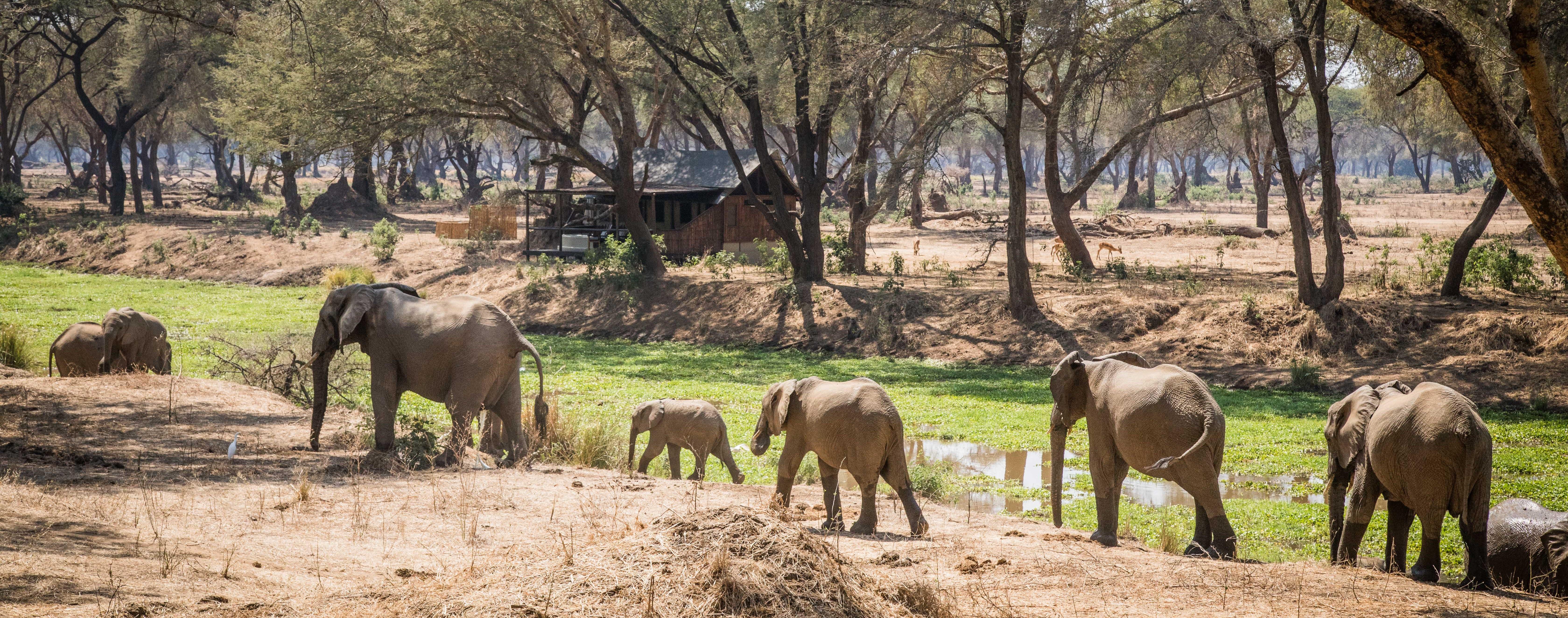 lower-zambezi-zambia-tented-safari-camp.