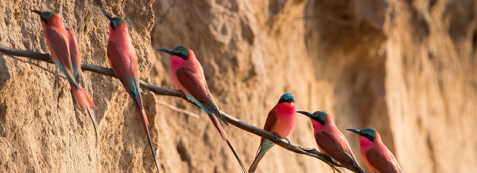luangwa-river-zambia-bee-eaters