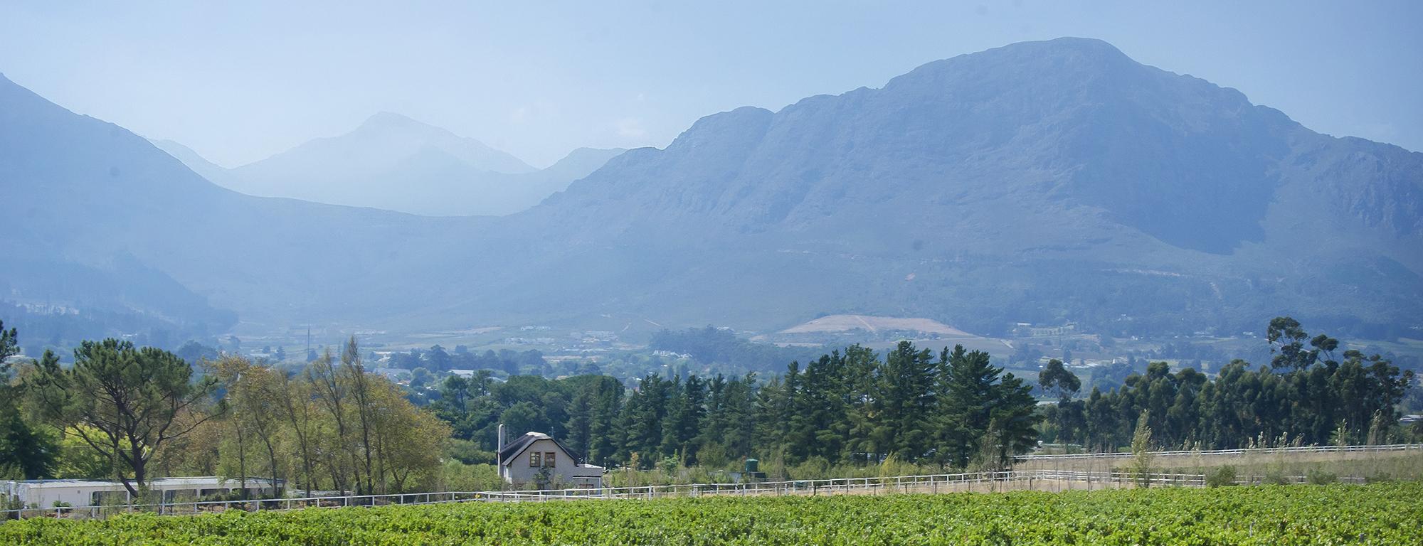 mont-rochelle-vineyards-franschhoek