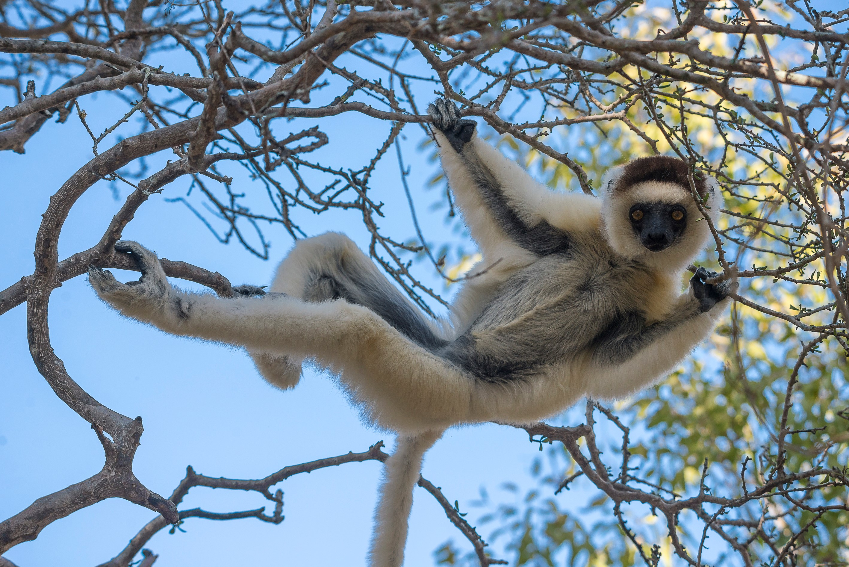 guided-lemur-trek-madagascar