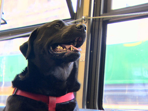 Dog Takes Bus to Park