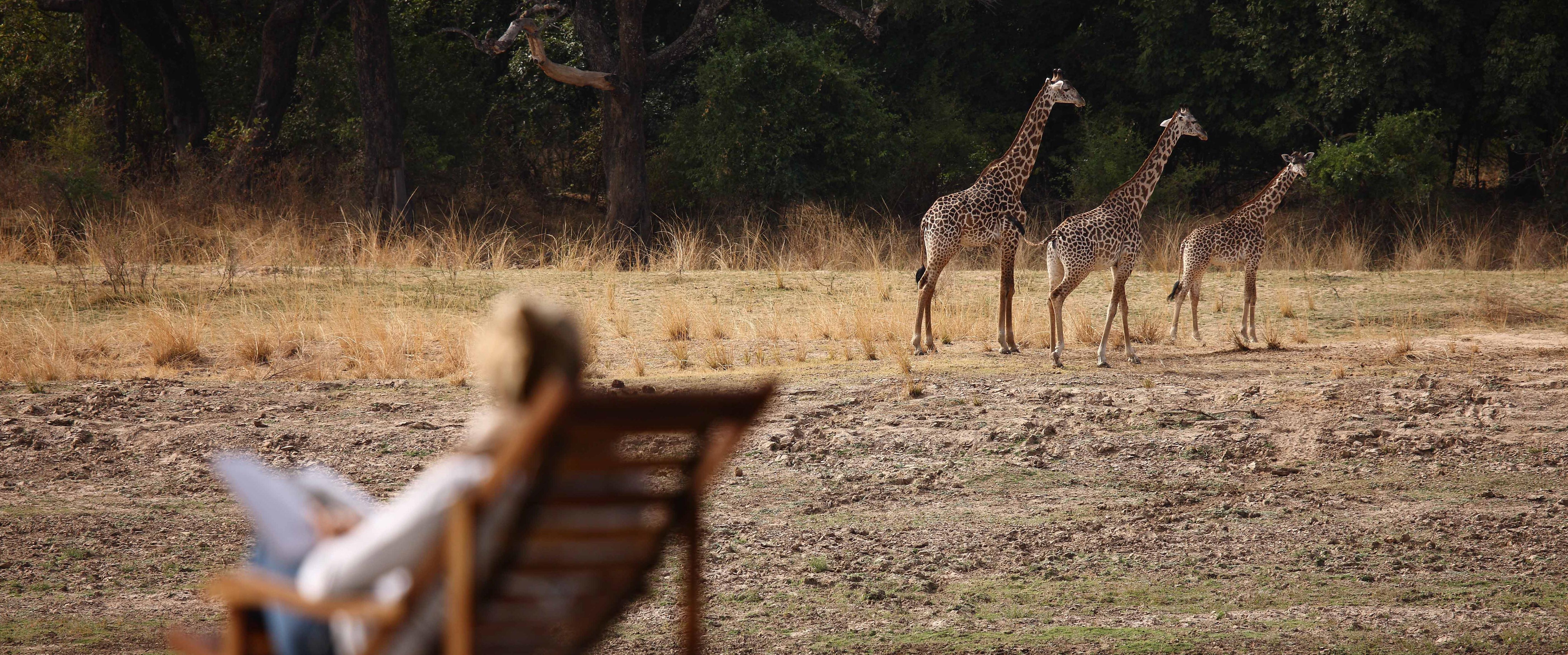 chinzombo-giraffe-sighting
