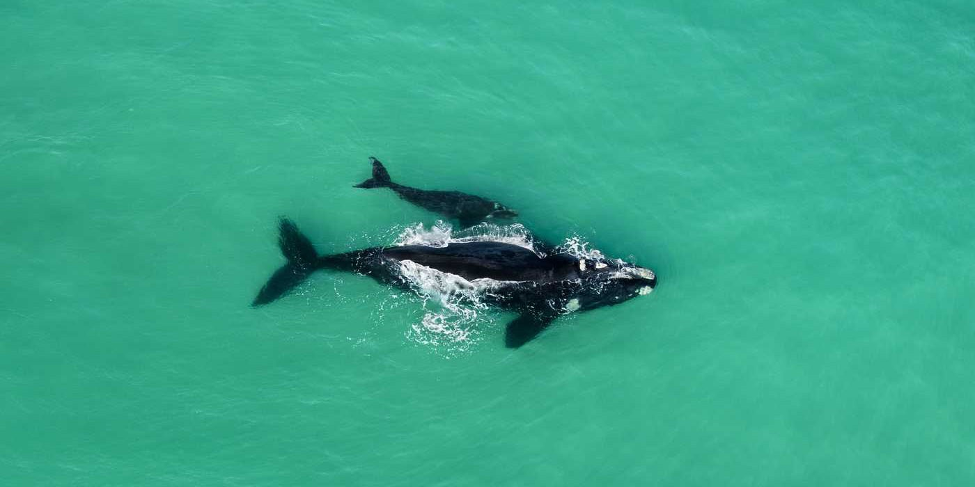 Whale-Watching-garden-route