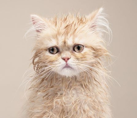 Uncanny Cat Lookalikes
