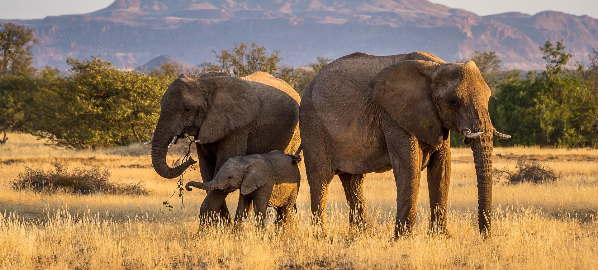 damaraland_elephant_family-sighting
