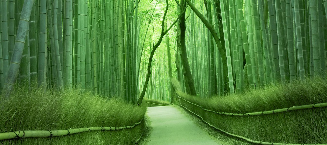kyoto-bamboo-groves