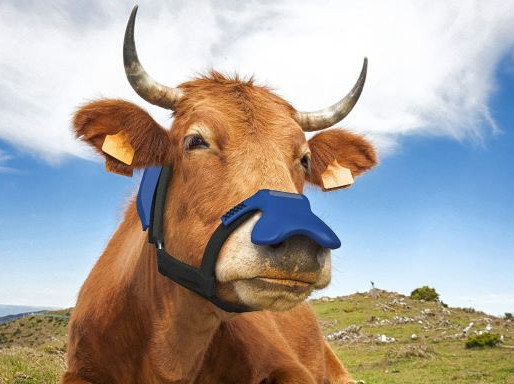 Face Masks for Cows