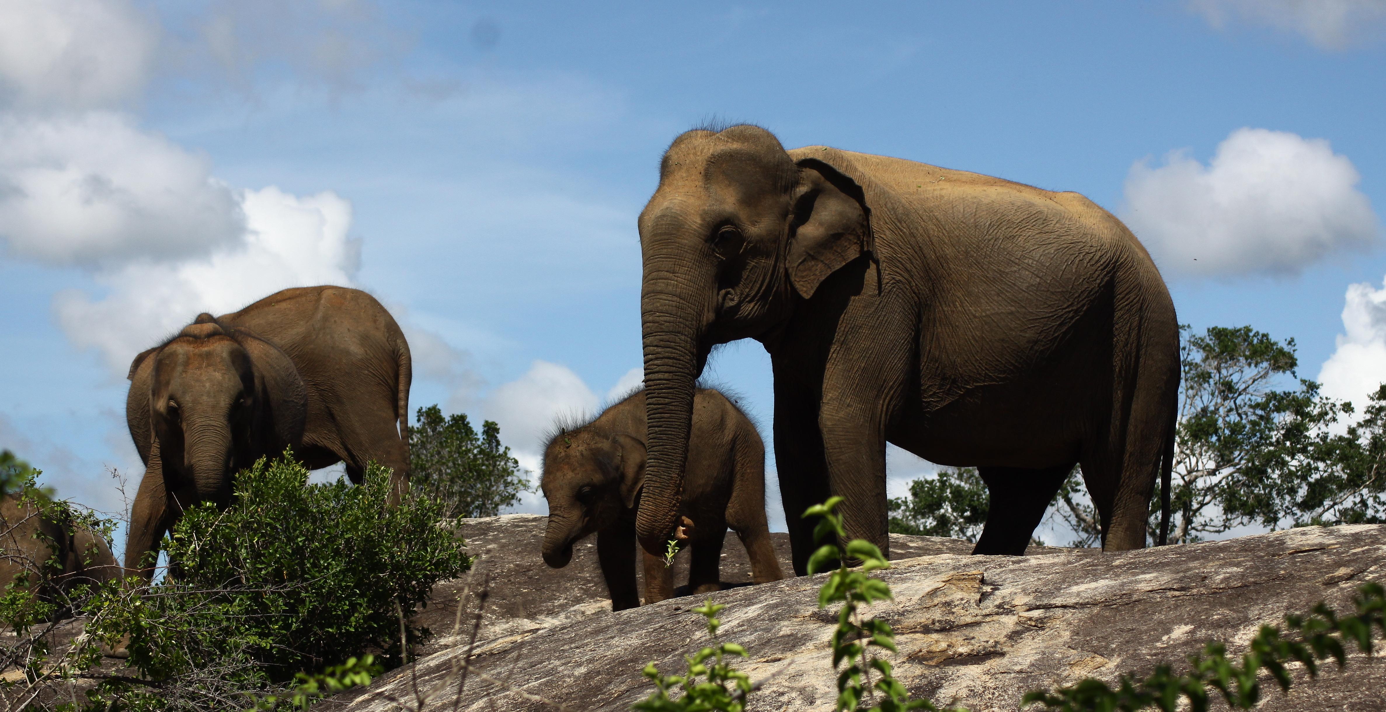 yala-wildlife-safari