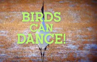 Birds Can Dance