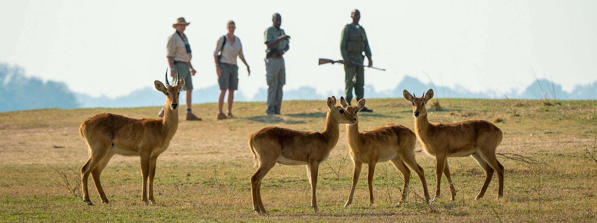 guided-walking-safari-luangwa-zambia