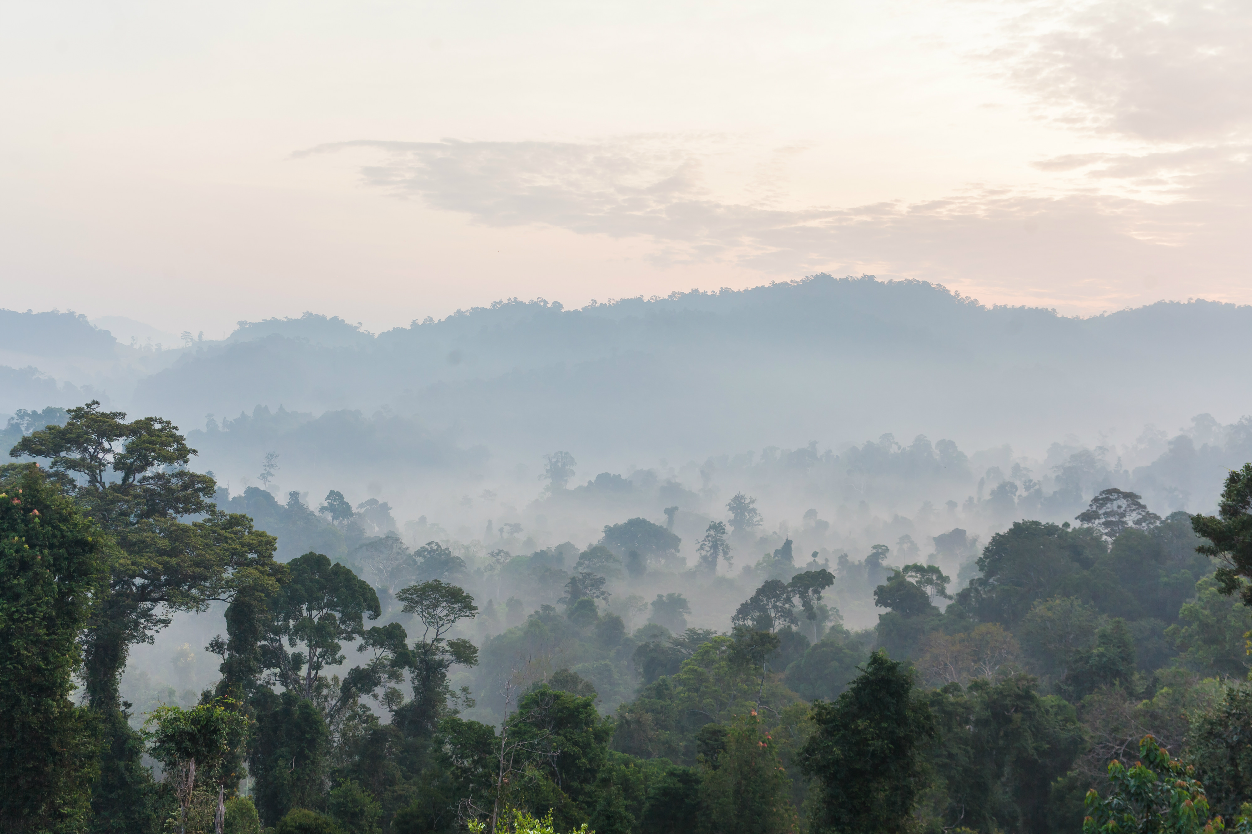 Taman_Negara_landscape_view-1