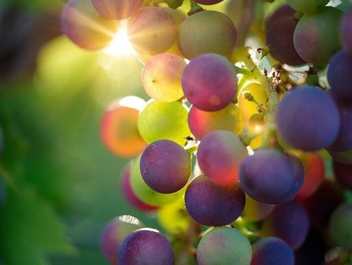 Vines Grown in Space