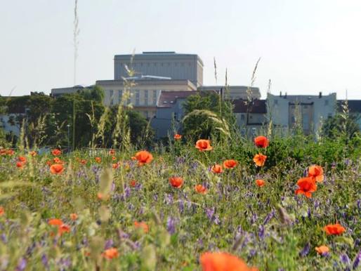 German Cities Venturing Into The Wilderness