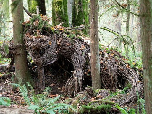 Natural Woodland Sculptures Delight Hikers