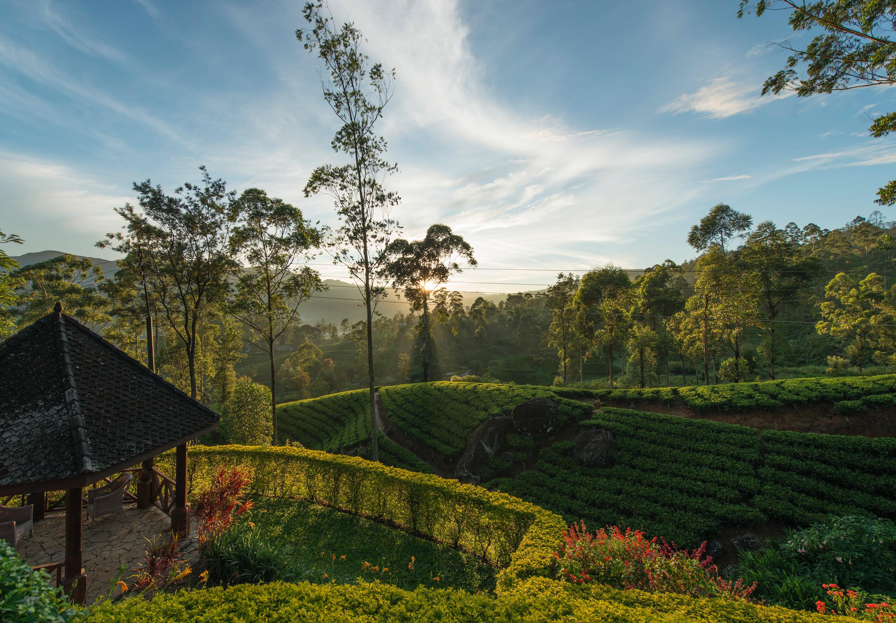 tea-fields-sri-lanka