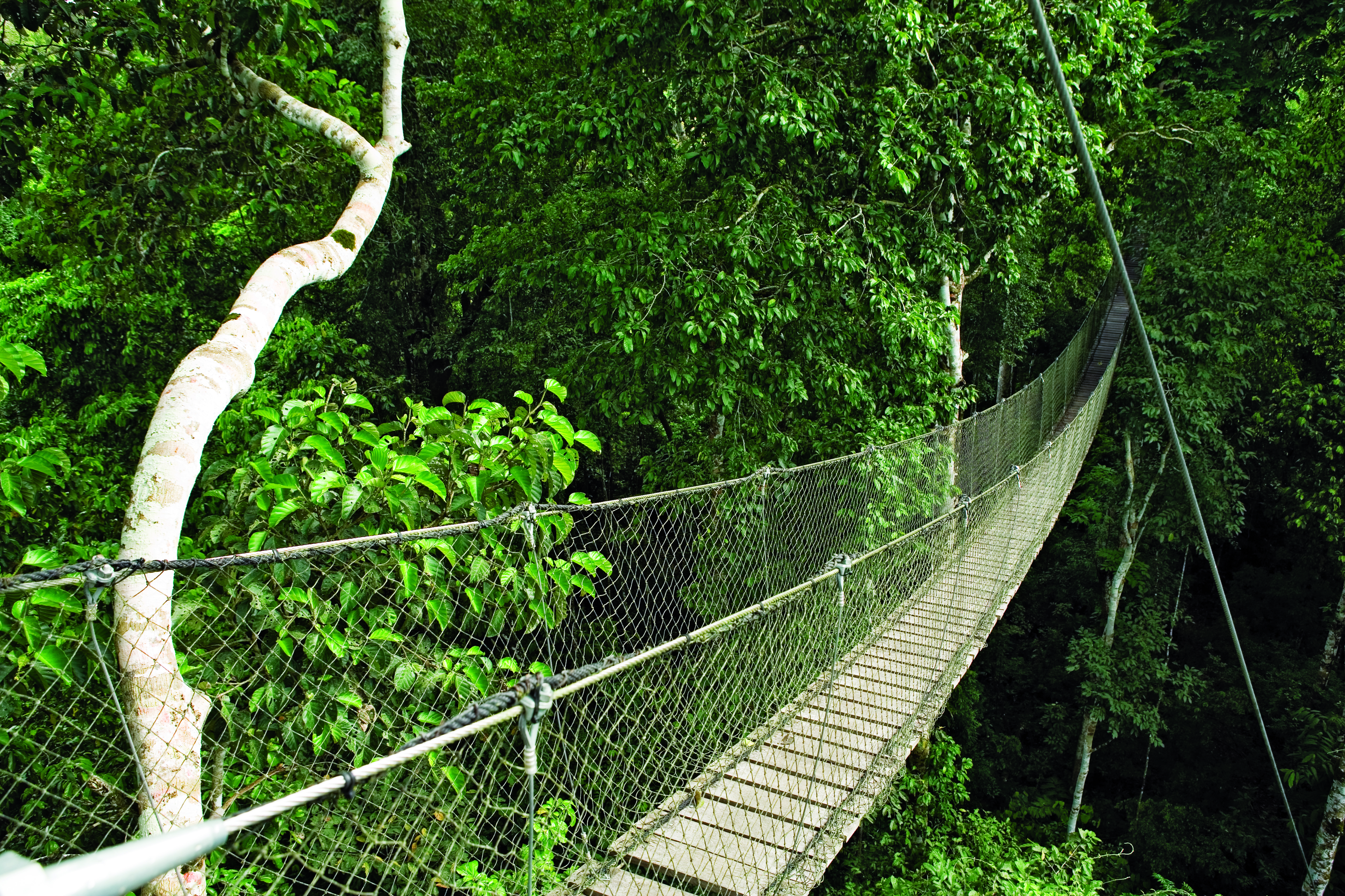 canopy-walk-way-reserva-amazonica