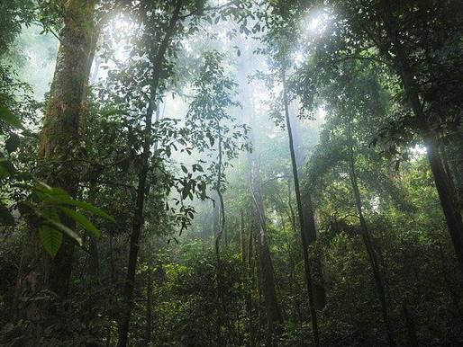 Tribe in Panama Wins Landmark Case