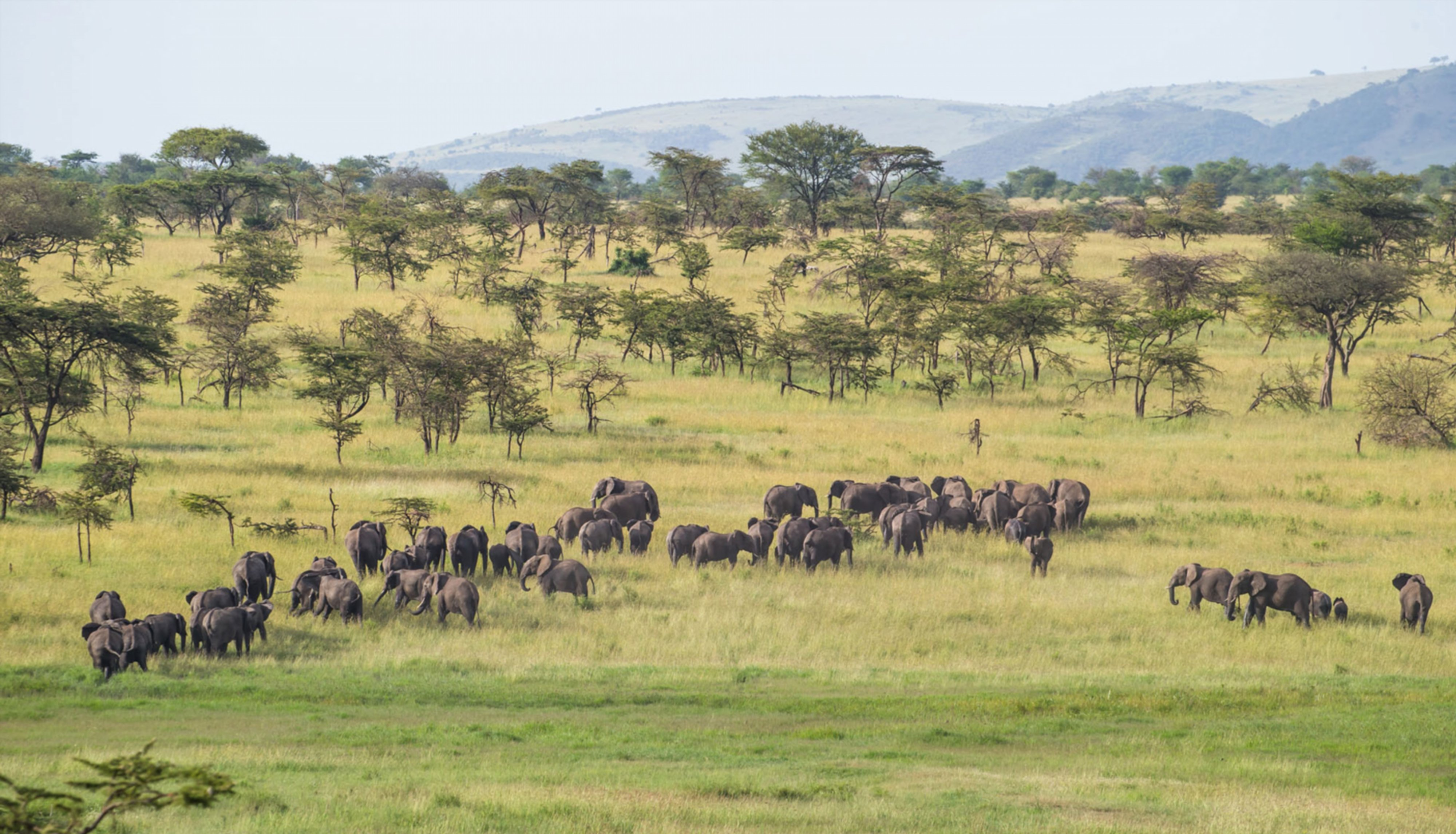 elephant-herd-serengeti