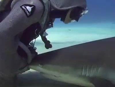 Hooking Up With Sharks