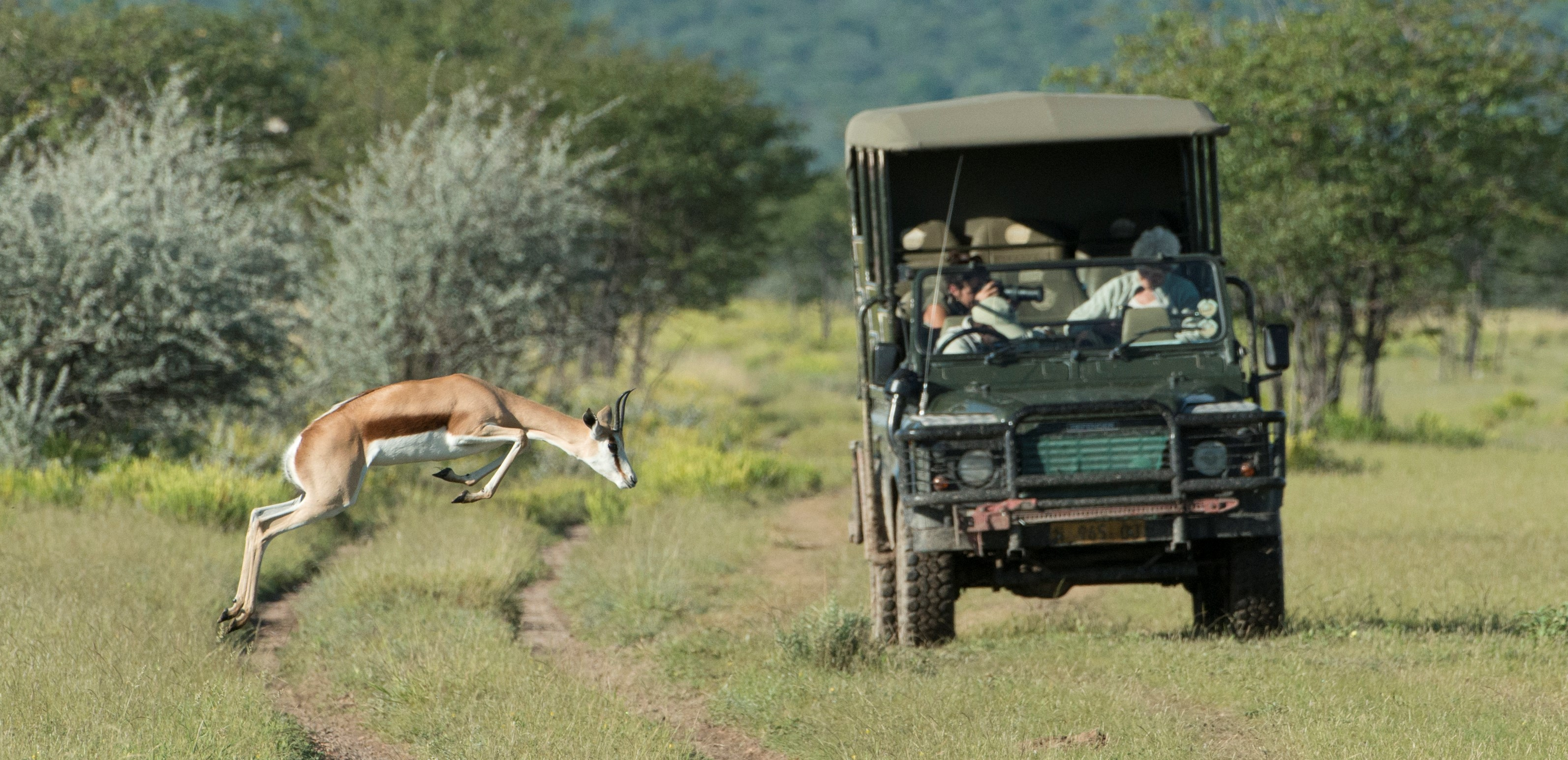 etosha-national-park-game-drive
