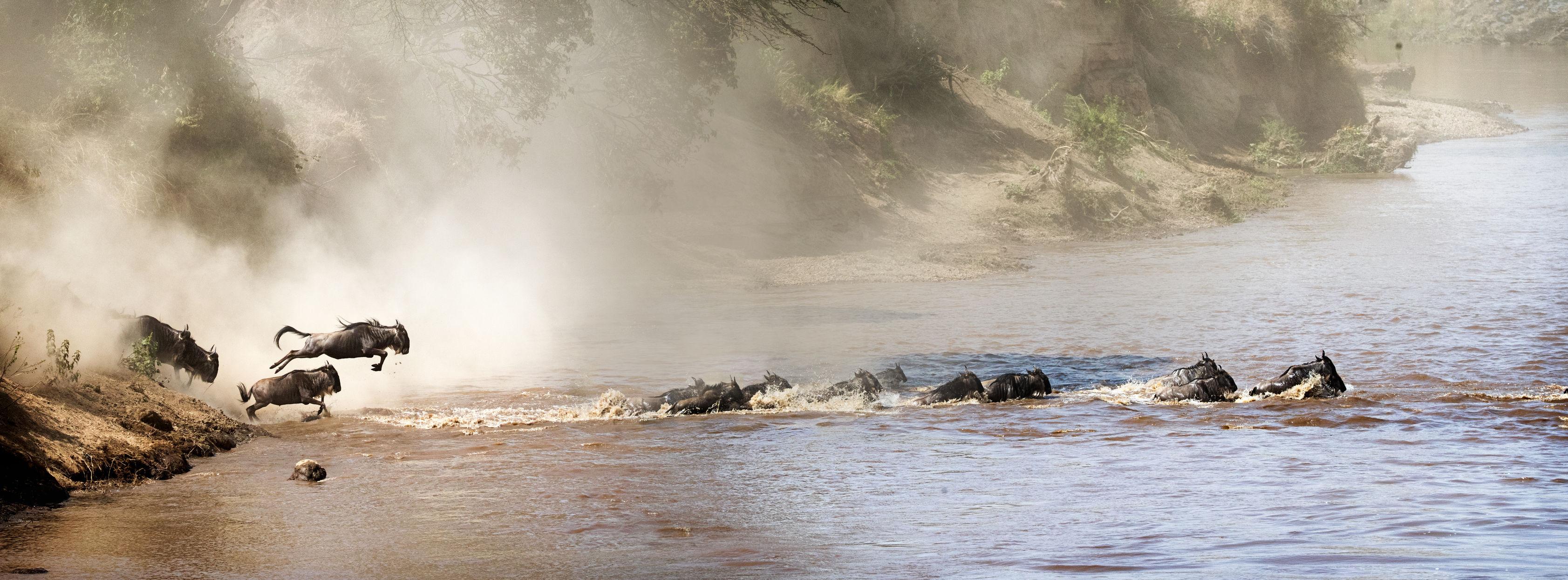 wildebeest-migration-serengeti