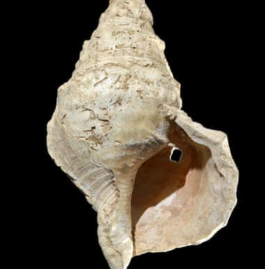 Oldest Conch Wind Instrument Discovered