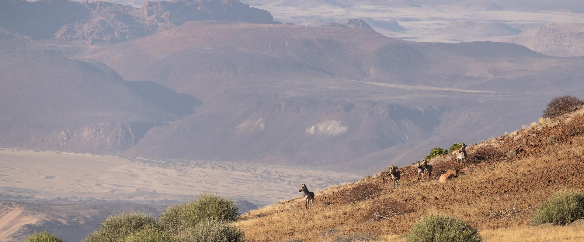 damaraland-namibia-zebra-sighting