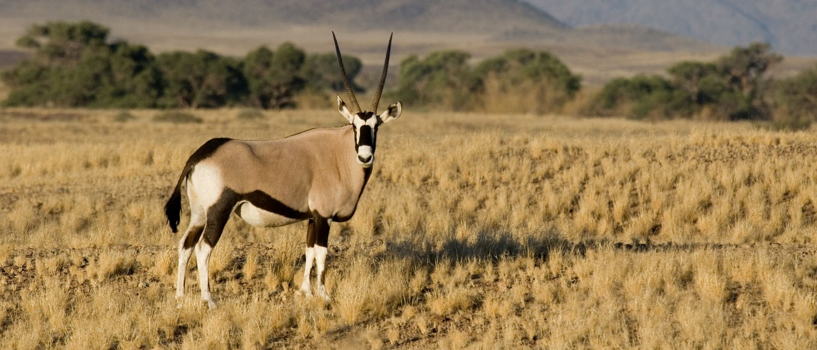 tailor-made-namibia-desert-safari