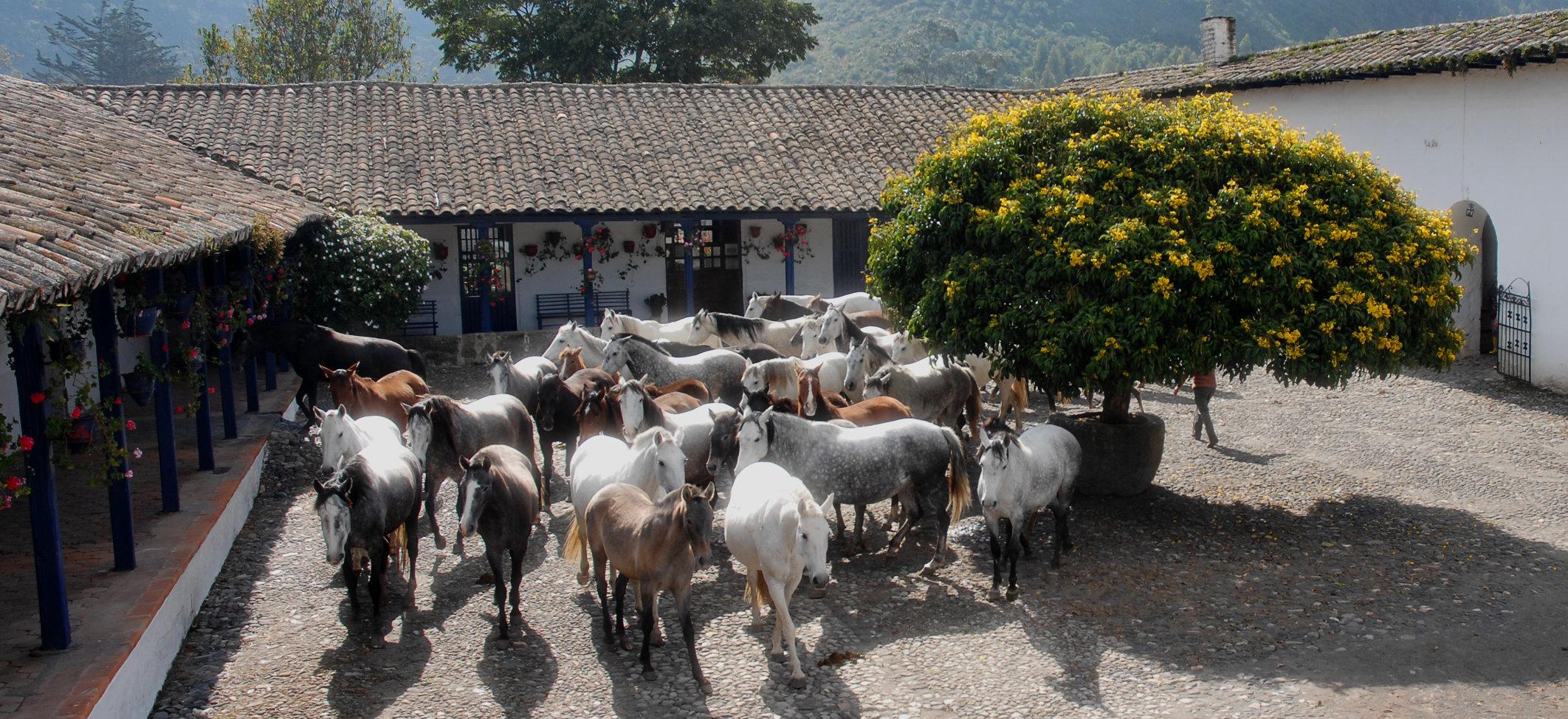 hacienda-zuleta-stables