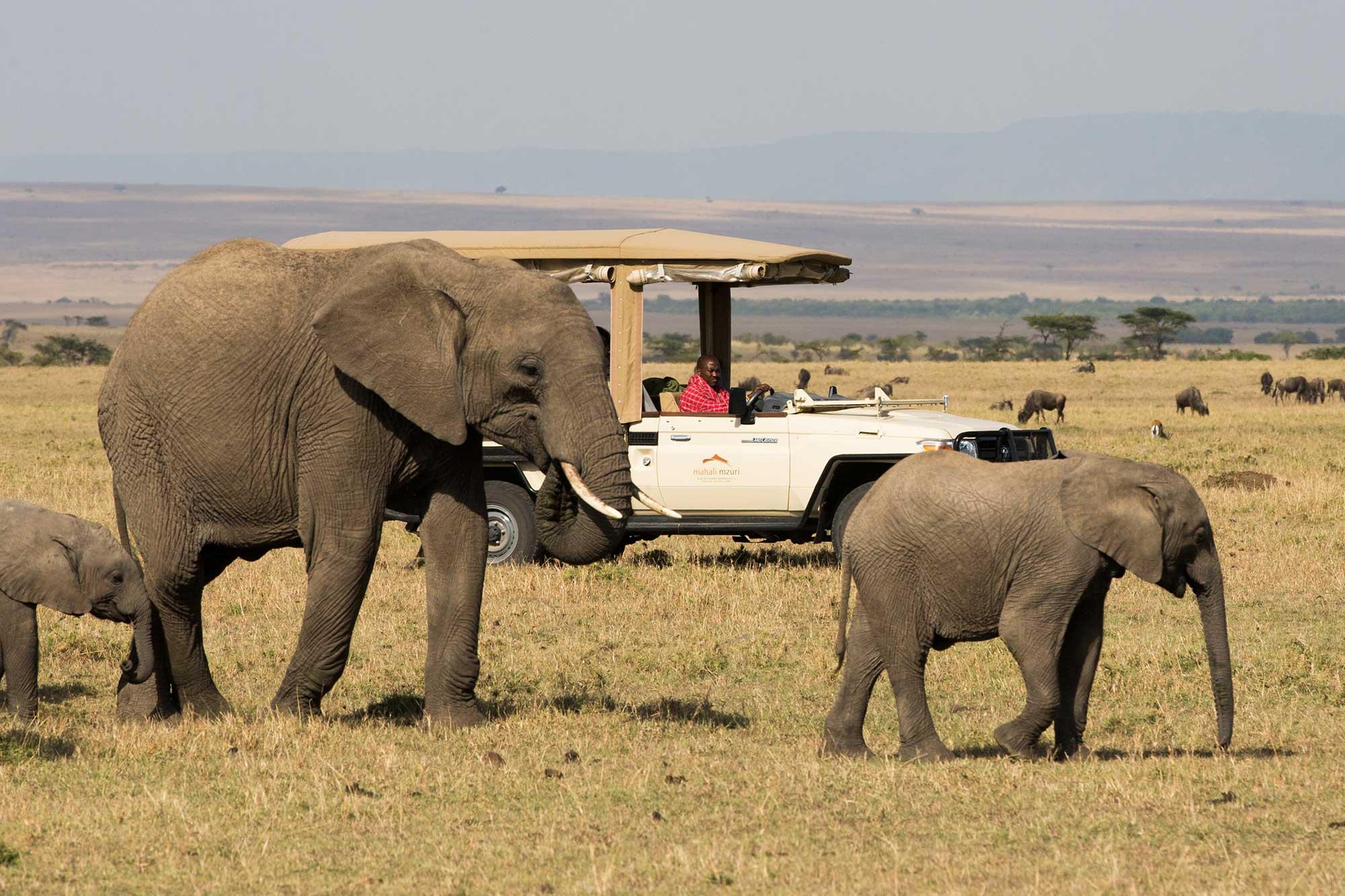 mahali-mzuri-game-vehicle-elephants