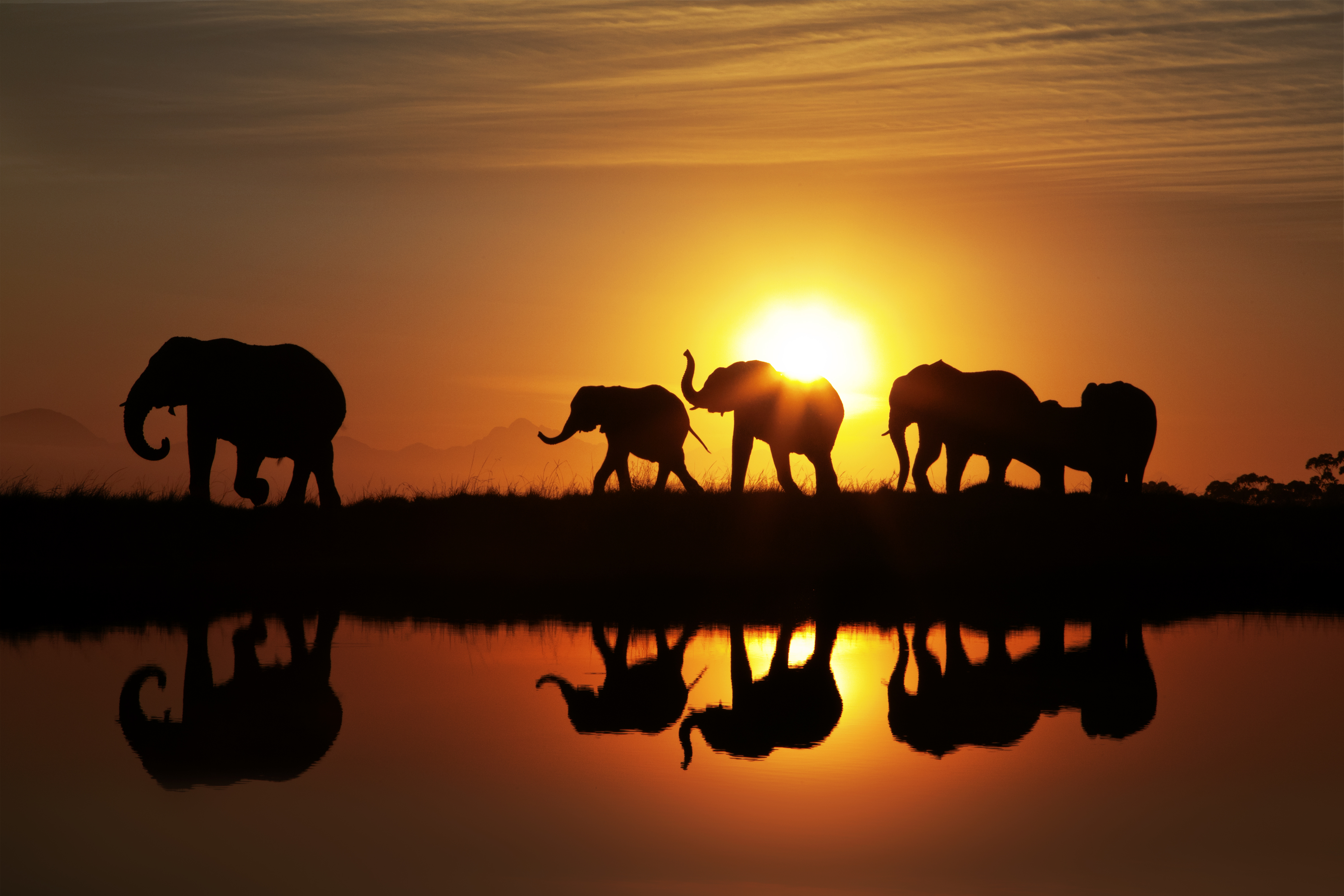 Elephants_at_Sunset