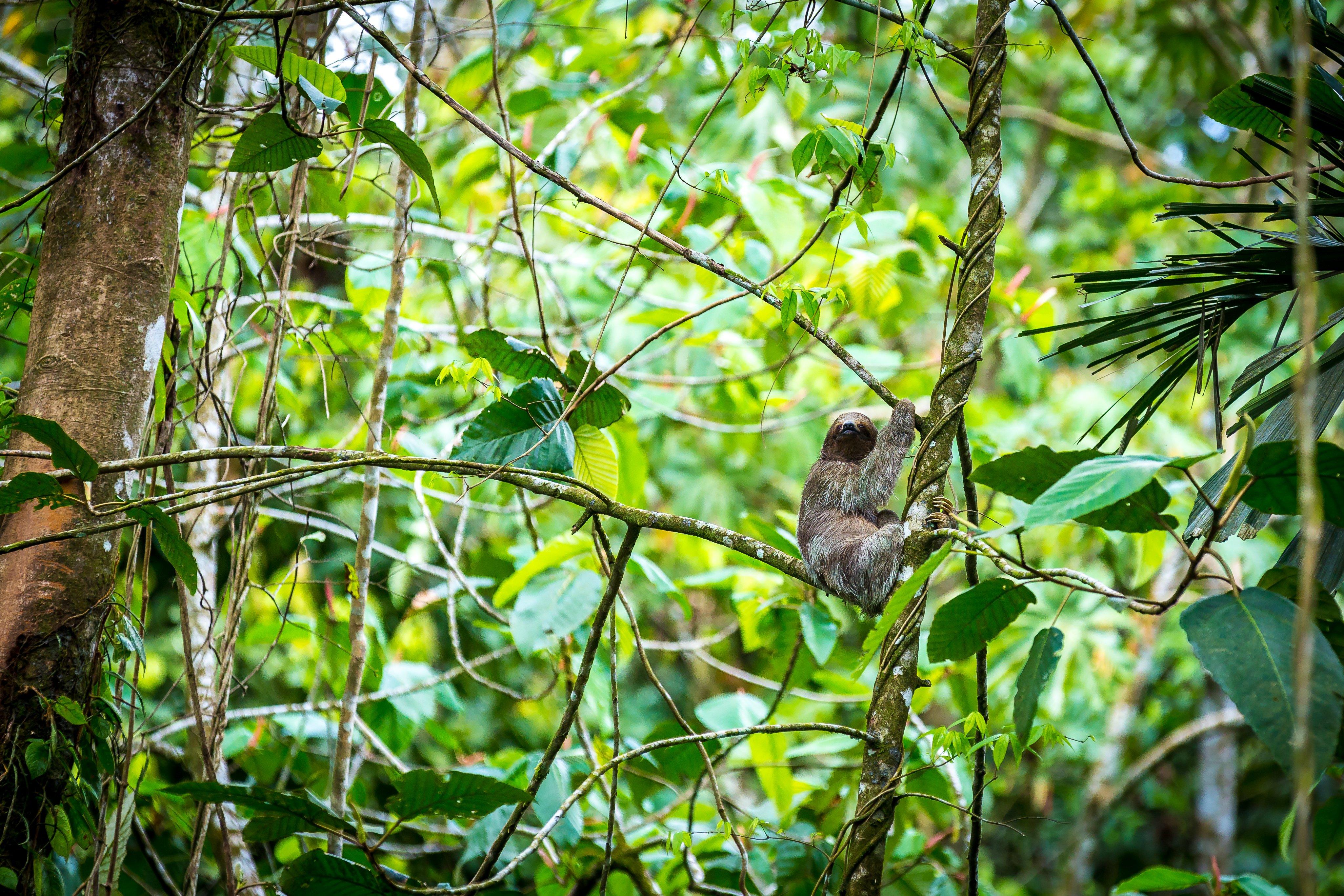 nayara-springs-wildlife-tour